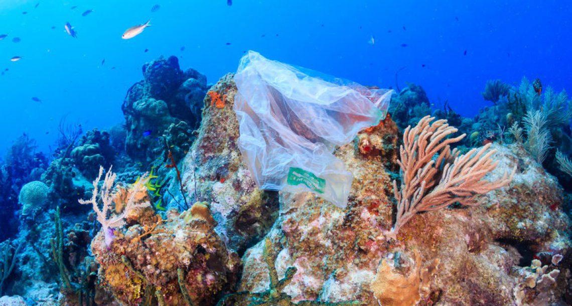 4 דרכים להציל את כדור הארץ: משקית מתמוססת במים ועד ביו-פלסטיק ישראלי