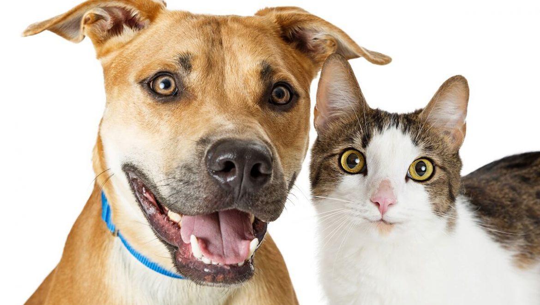 הכלבים והחתולים בהלם: יש ביטוח בריאות גם לחיות מחמד